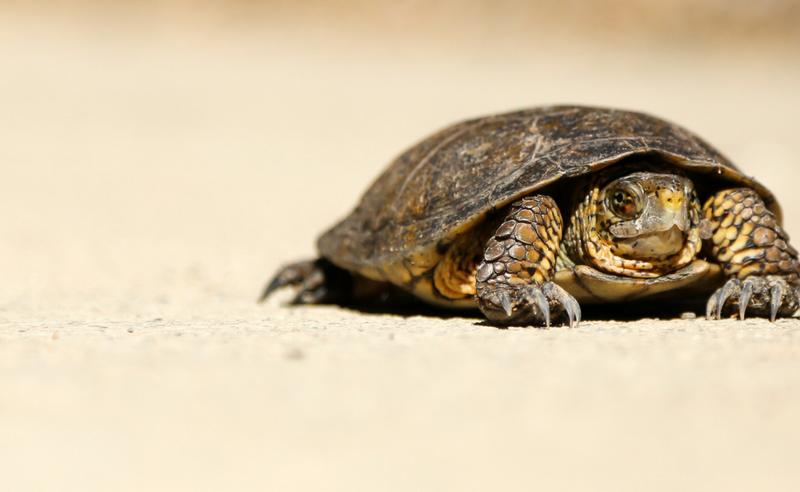 The Benefits of Slow Practice